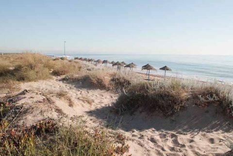 Regenerada la playa de La Garrofera, en El Saler (Valencia)