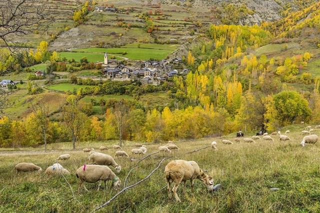 La mayor parte de los bosques de ribera del Parc Natural de l'Alt Pirineu están mal conservados