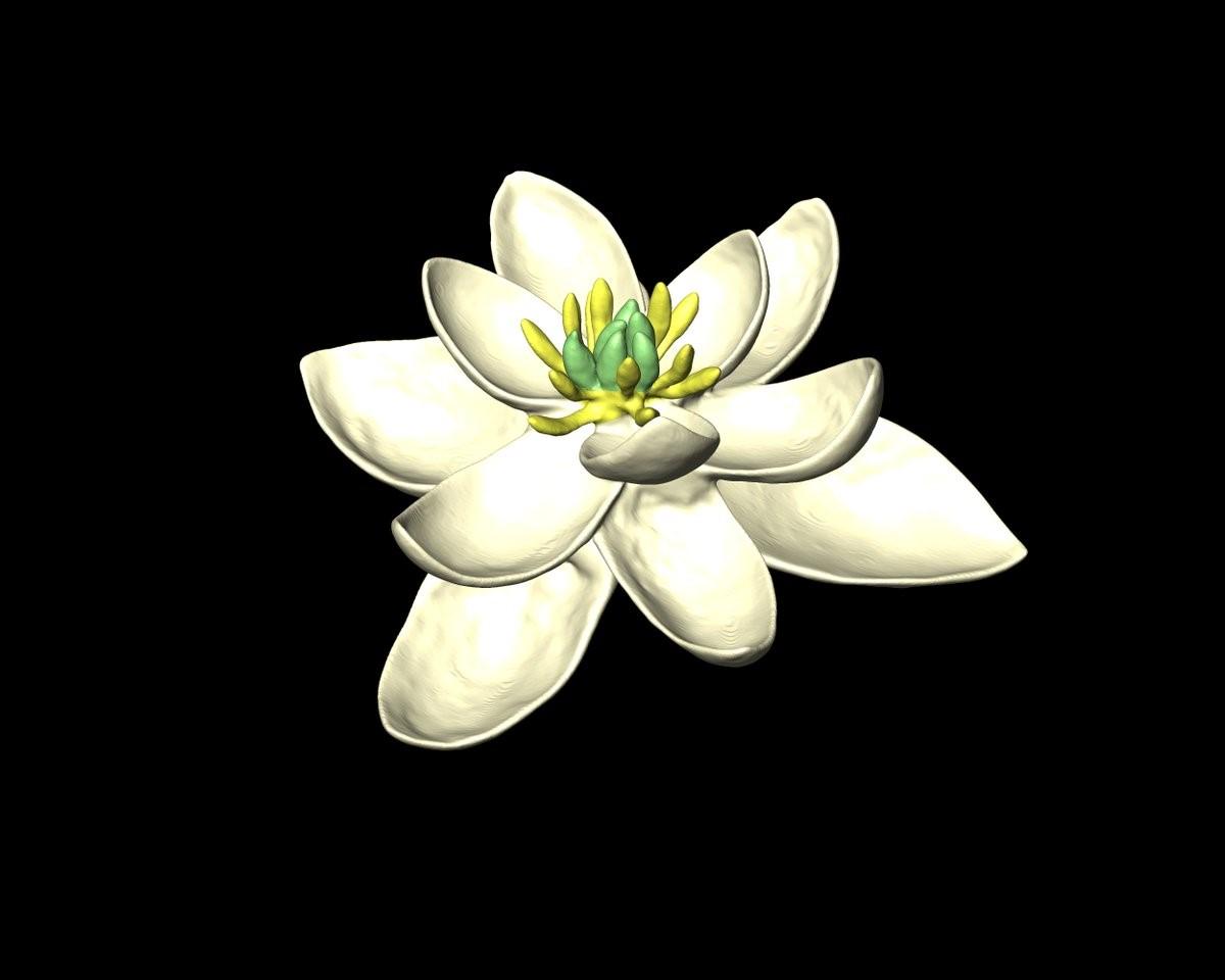 Pétalos prehistóricos: los científicos revelan cómo era la primera flor