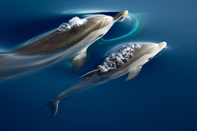 El tráfico marítimo mata cada año hasta 40 cetáceos en el Mediterráneo