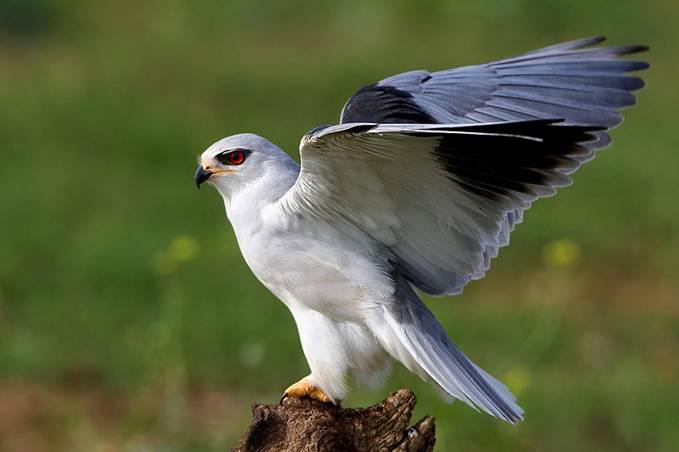 Presencia de aves de origen africano en el sur de España