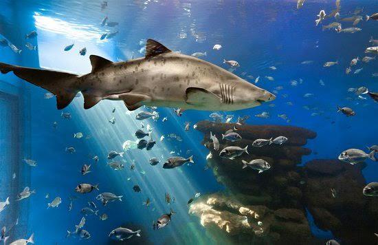 Palma Aquarium y los pescadores renuevan su colaboración para proteger la fauna y flora marina