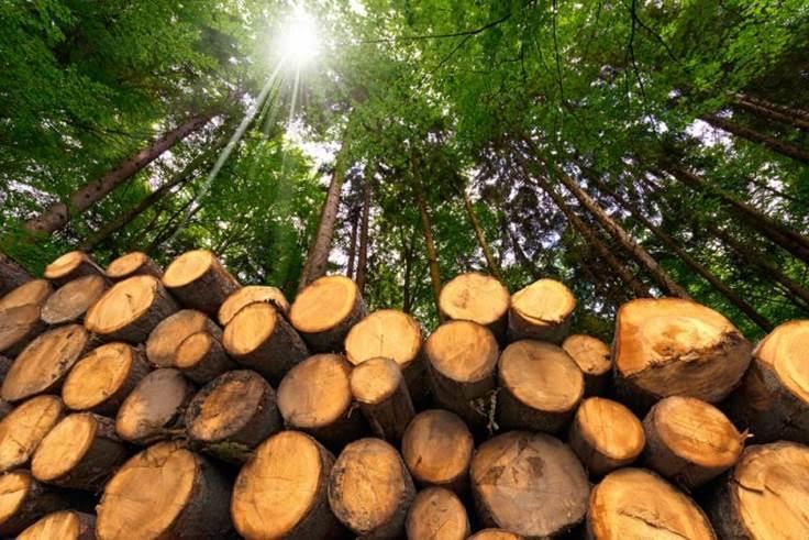 Ence presenta su Decálogo para la Sostenibilidad de la Biomasa como Combustible