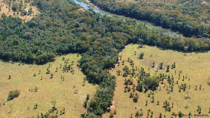 Los corredores forestales 'vitales' para la polinización