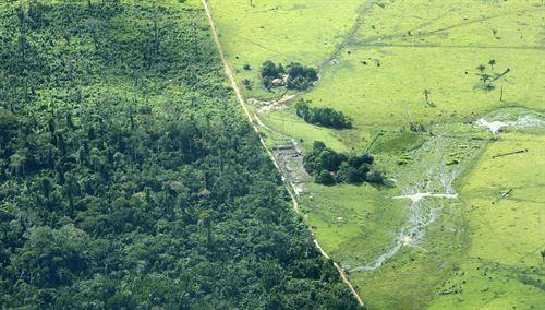 La deforestación del Amazonas conlleva la pérdida de las comunidades microbianas
