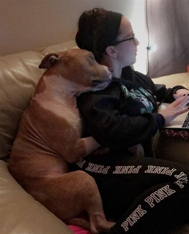El perro que da abrazos