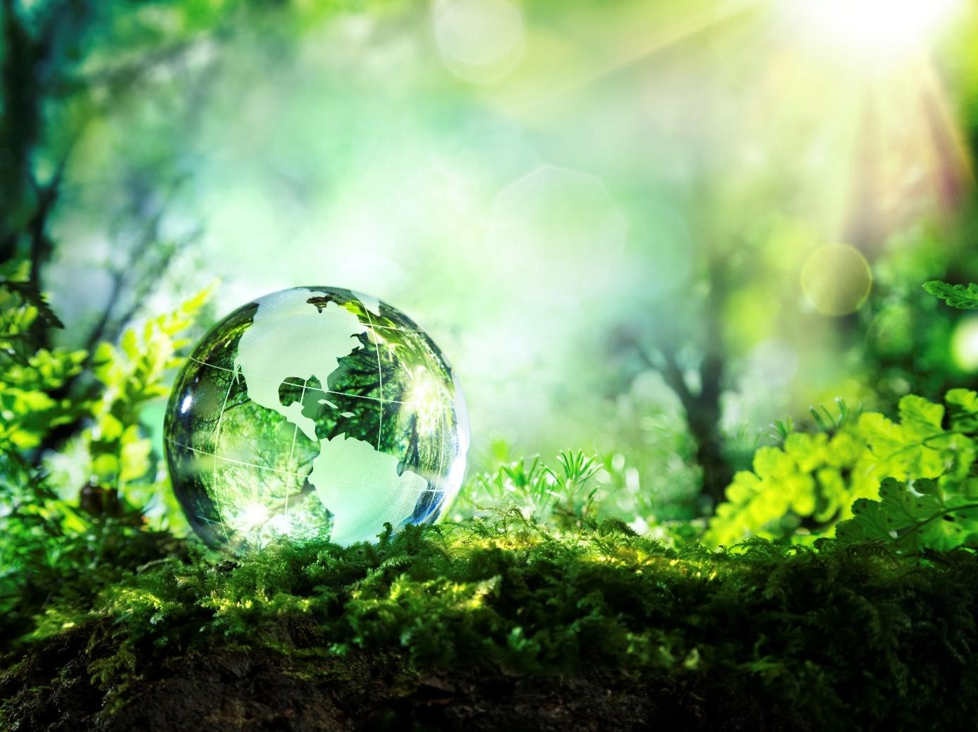 Curiosas innovaciones amigables con el Medio Ambiente