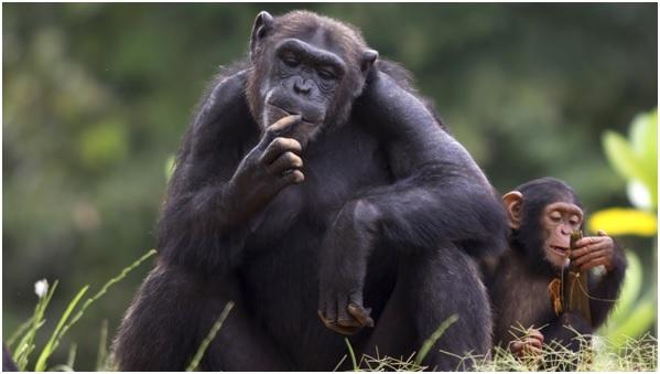 """Los 10 animales que destacan por su """"inteligencia"""""""