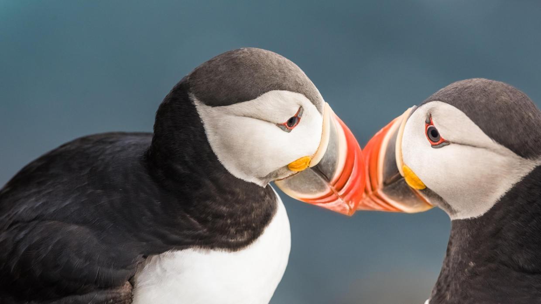 La vida íntima de las aves como nunca la viste antes