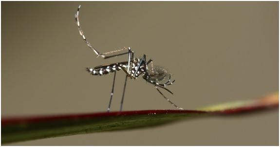 Zica: un viejo virus que vuelve a atacar