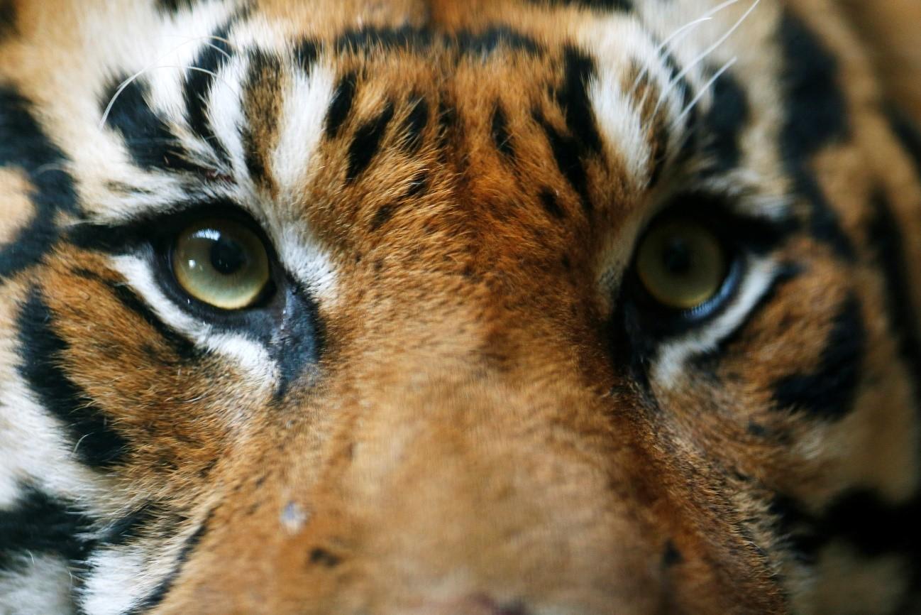 10 animales amenazados por la caza furtiva y el comercio ilegal