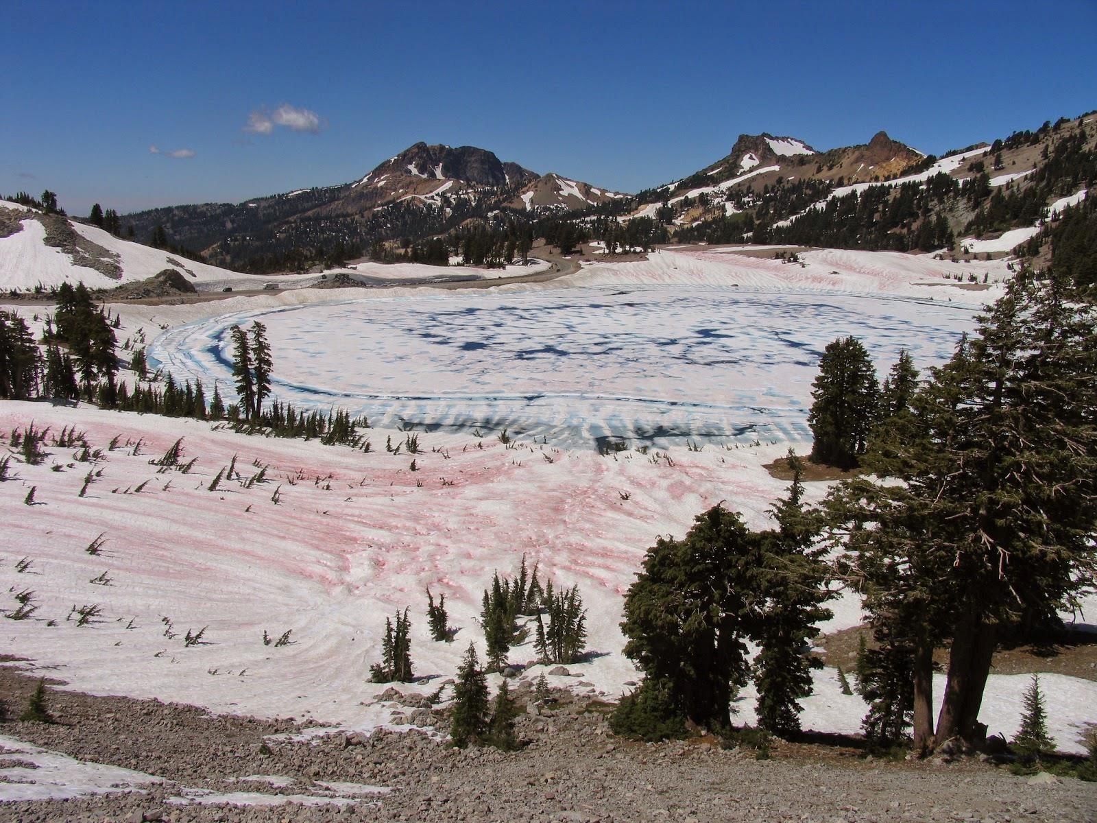 Algas + Cambio Climático: ¿el fin de los glaciares?