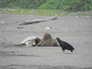 Costa Rica. Parque Nacional Tortuguero cerrará sector público de Jalova