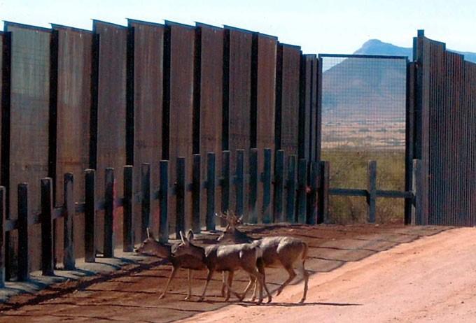 Grupos ecologistas dicen que el muro de Trump podría ser devastador