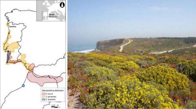 Historia de especies de arbustos en zonas áridas