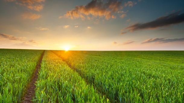 Ecoticias.com explica por qué es necesario decantarse por los cultivos sostenibles YA