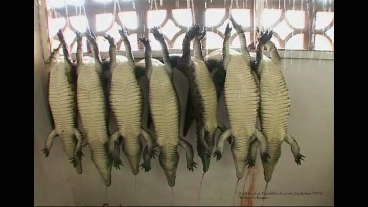 Reptiles convertidos en 'lujosos' bolsos Birkin o correas de reloj (Vea VIDEO)
