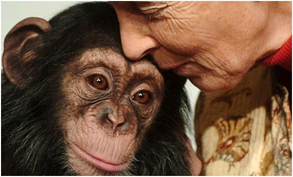 Jane Goodall, su vida