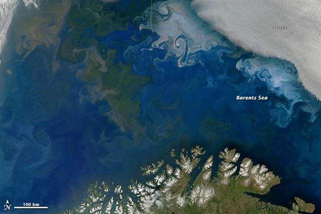 En fitoplancton marino en franca 'recesión'