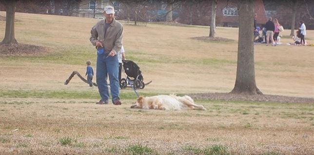 Golden Retriever, 'oscar' al mejor perro (Vea VIDEO)