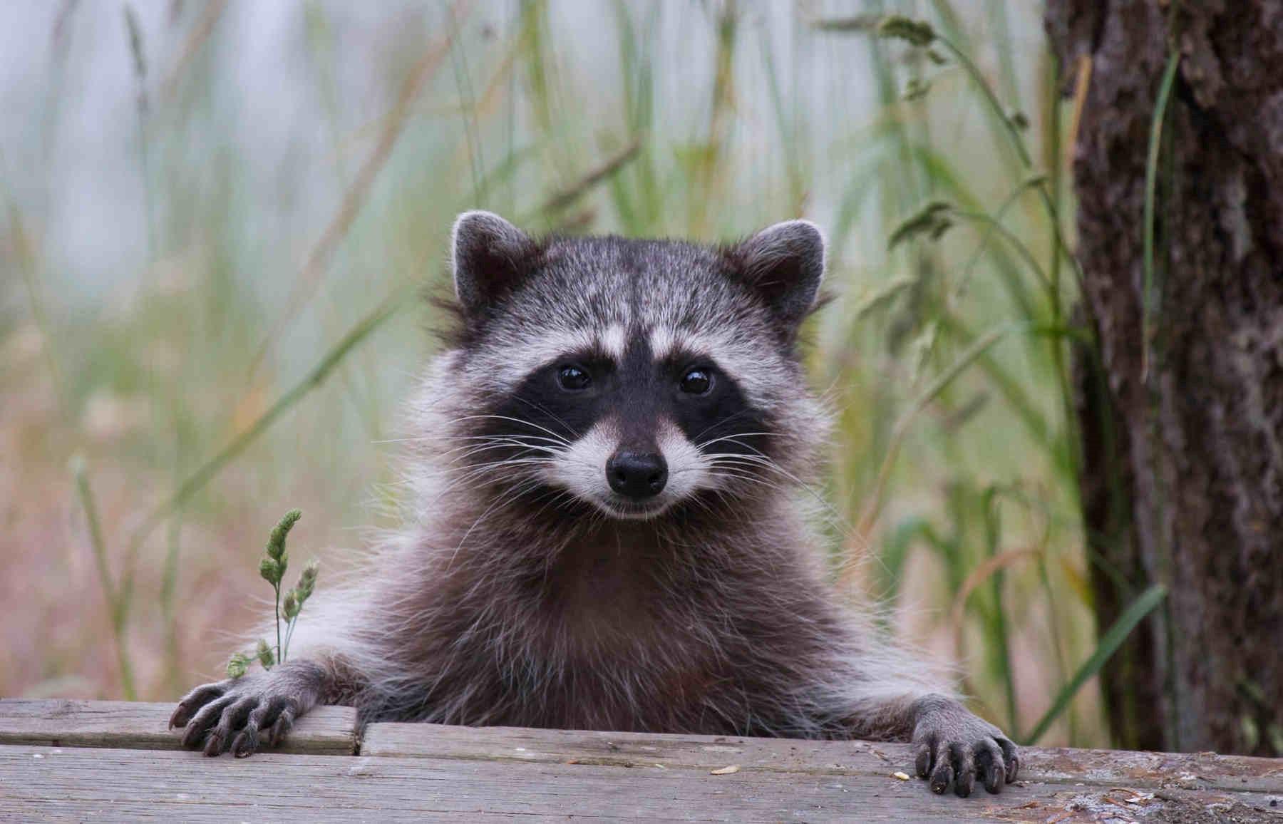 5 animales tan vistosos como peligrosos