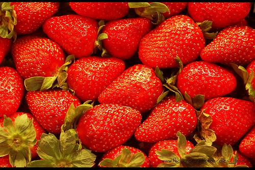 Demuestran mayor valor nutritivo de fresas orgánicas