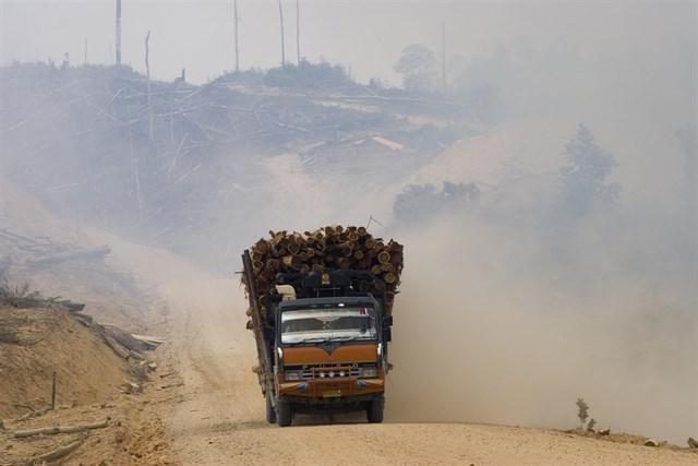 Europa limitará el uso de aceite de palma por su nefasto impacto en la deforestación