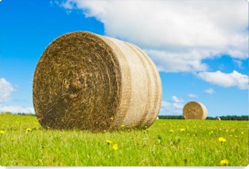 Curso E-Learning de Energía de la Biomasa
