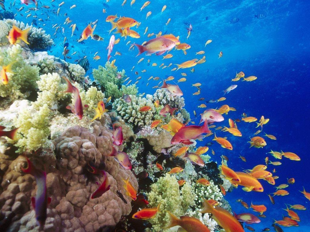 Oceana alerta, que el 99 por ciento de las especies marinas en peligro de extinción carece de planes de conservación