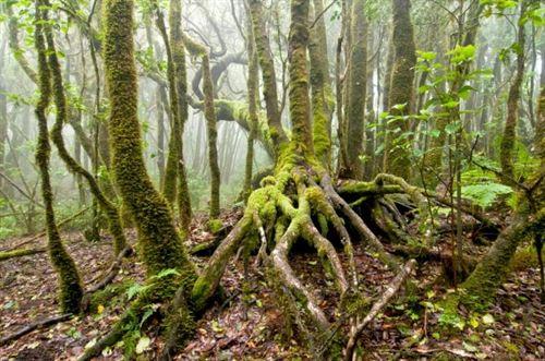 La Tierra ha perdido 1,5 millones de km2 de bosque en los últimos doce años