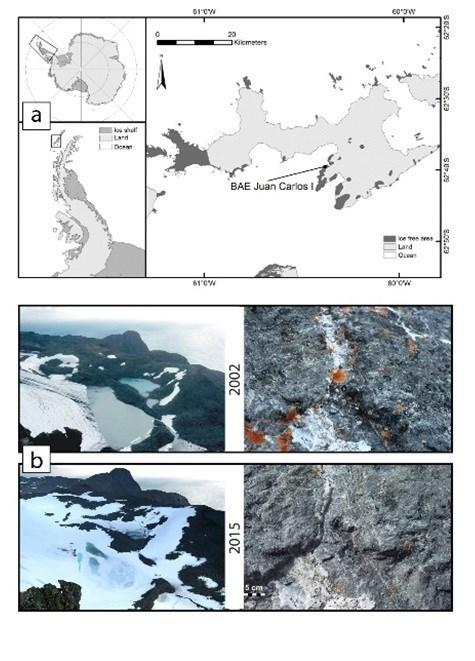 Los líquenes de la Península Antártica están frenando su crecimiento por el aumento de la cobertura de nieve