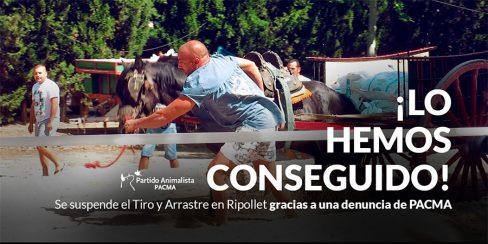 La denuncia de PACMA frena la celebración del Tiro y Arrastre en Ripollet