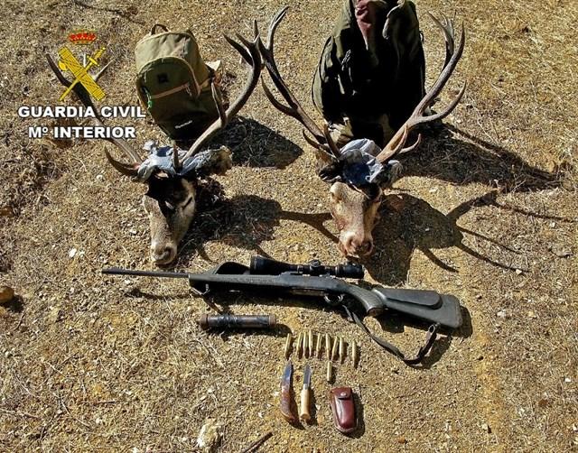 Dos detenidos por cazar de forma furtiva dos ciervos en Almodóvar del Campo