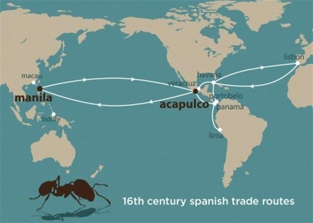 Los barcos españoles del siglo XVI propagaron las hormigas tropicales por todo el planeta