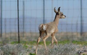 Exitosa reintroducción de especies de fauna en su hábitat natural.