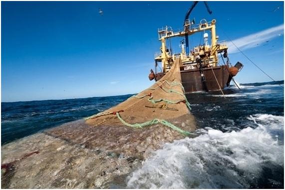 Pesca sostenible en España