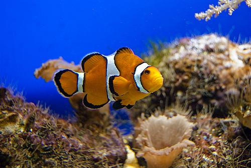 Coalición Canaria solo quiere proteger el 0,5% de las especies marinas de las islas