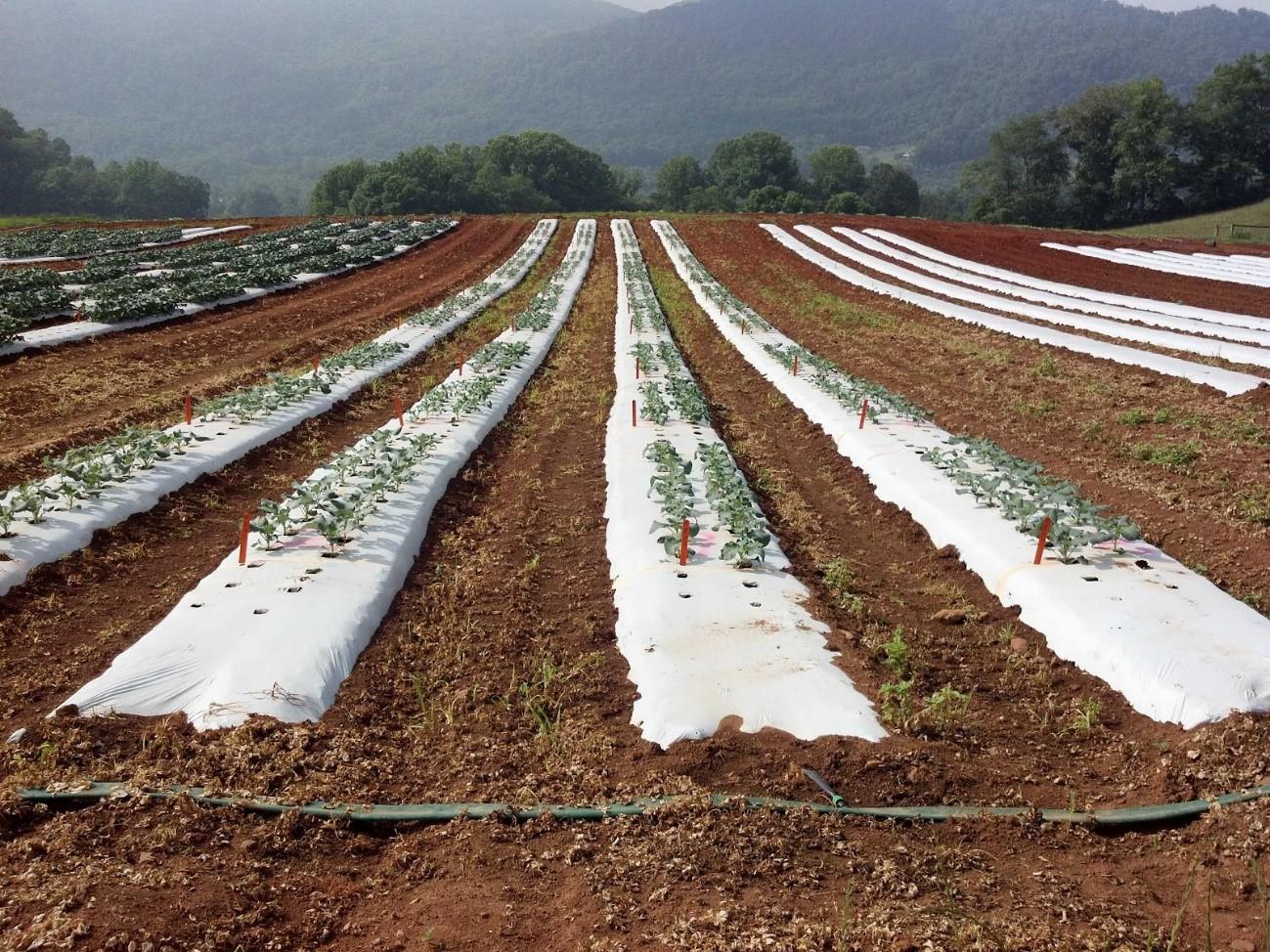 Plásticos: una bomba contaminante en nuestros campos
