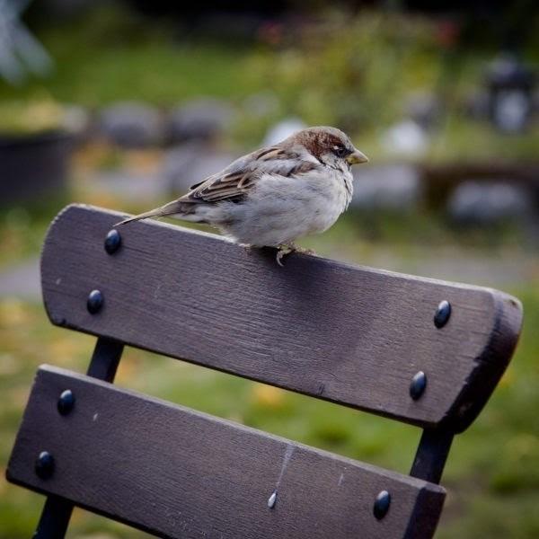 Las altas temperaturas pueden hacer saltar a los pollos de los nidos, NO hay que cogerlos y exponer el caso en el Ayuntamiento o/y SEPRONA