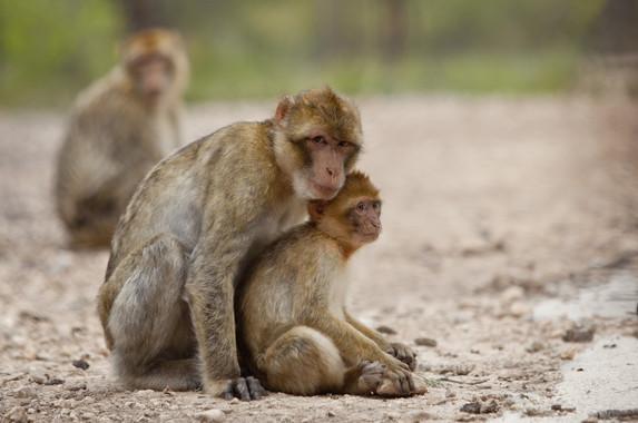 Un mono ante el espejo, ¡ese soy yo!