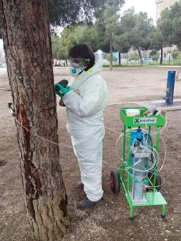 Althenia, de Grupo Sando, emplea la endoterapia, con inyecciones en los troncos, para combatir las plagas en parques