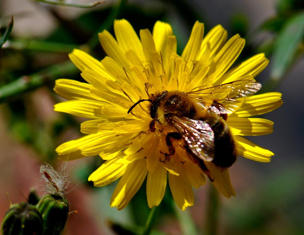 Alarma en la UE por muerte masiva de abejas