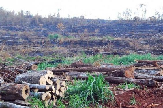 Solo en 2016 fueron deforestadas más de 200 mil hectáreas en el Chaco paraguayo