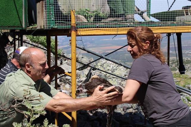 Dos primeras águilas perdiceras liberadas en Montes de Toledo