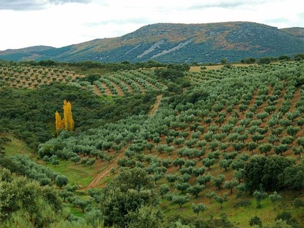 La política forestal Castilla La Mancha retrocede 150 años