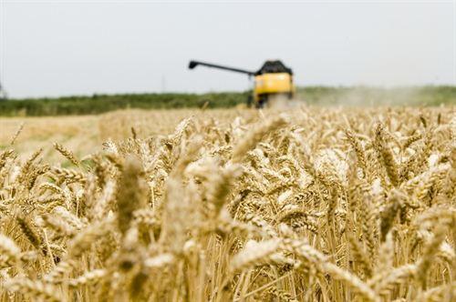 Los agrocombustibles reducen la producción de alimentos y aumentan el hambre en el mundo, según Amigos de la Tierra