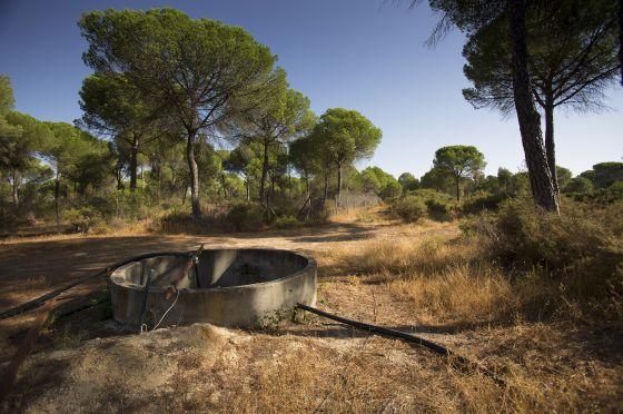 Los acusados de abrir pozos en entorno de Doñana se van de 'rositas'