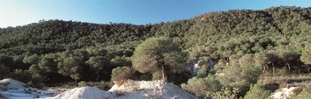 ¿Paisajes protegidos de los parajes alicantinos de la Sierra Escalona, Dehesa de Campoamor y su entorno?