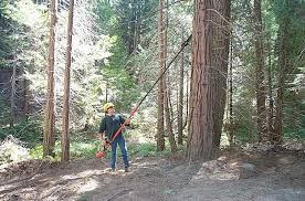 Reducir la cantidad de biomasa mediante el desarrollo de modelos selvícolas imitando la naturaleza para evitar incendios