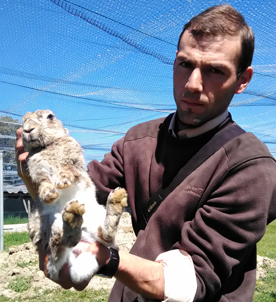 Fundación Naturaleza y Hombre repuebla con conejos el bosque mediterráneo